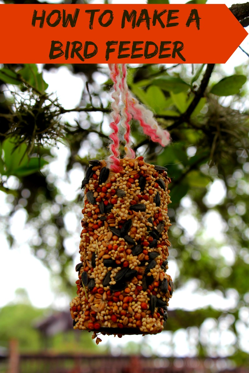 how to make a bird feeder house of fauci 39 s