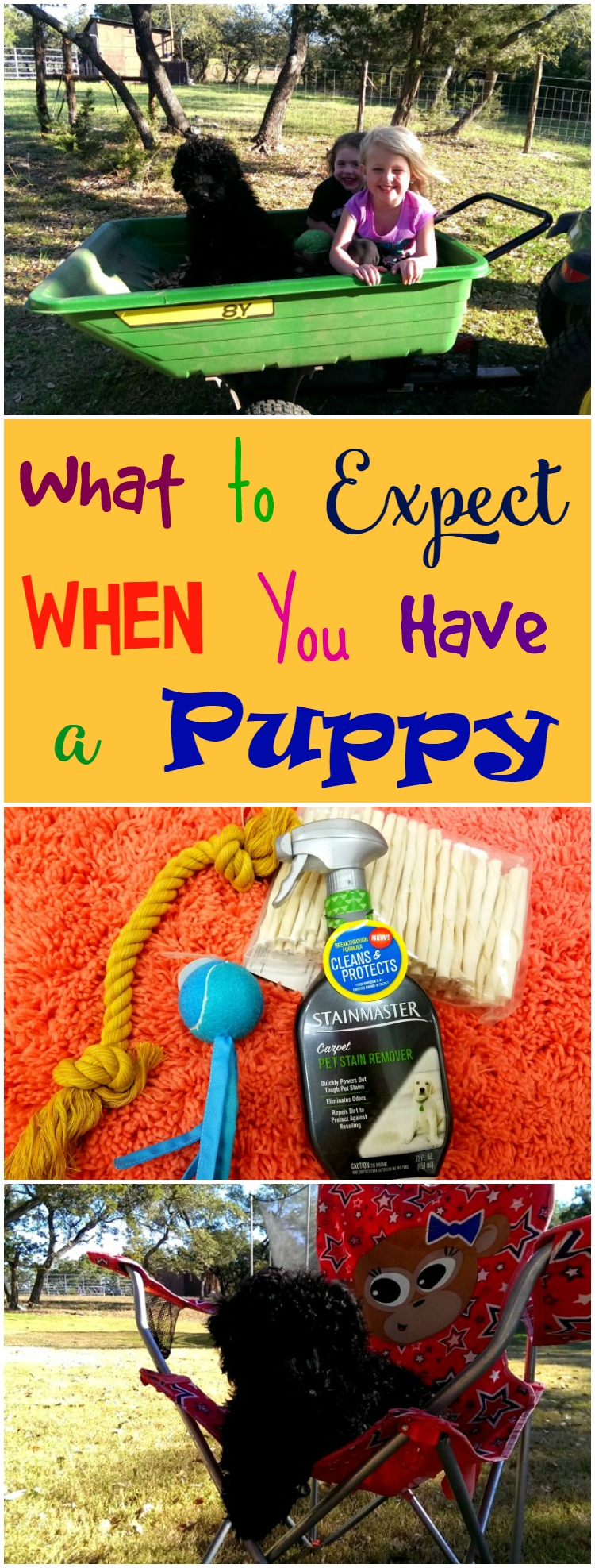 Puppies are hard work. Here are some great things to expect when you bring a puppy home.