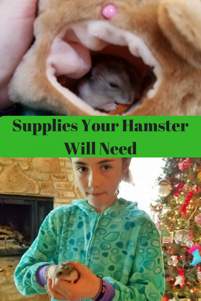 When you bring a hamster home, there are certain items your hamster will need. Here is a great list that will help you.