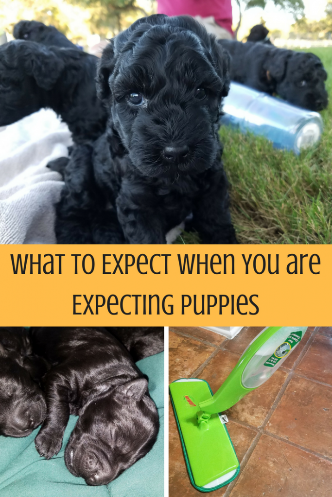 You need to be ready before your dog has puppies. There is a lot that you need to.