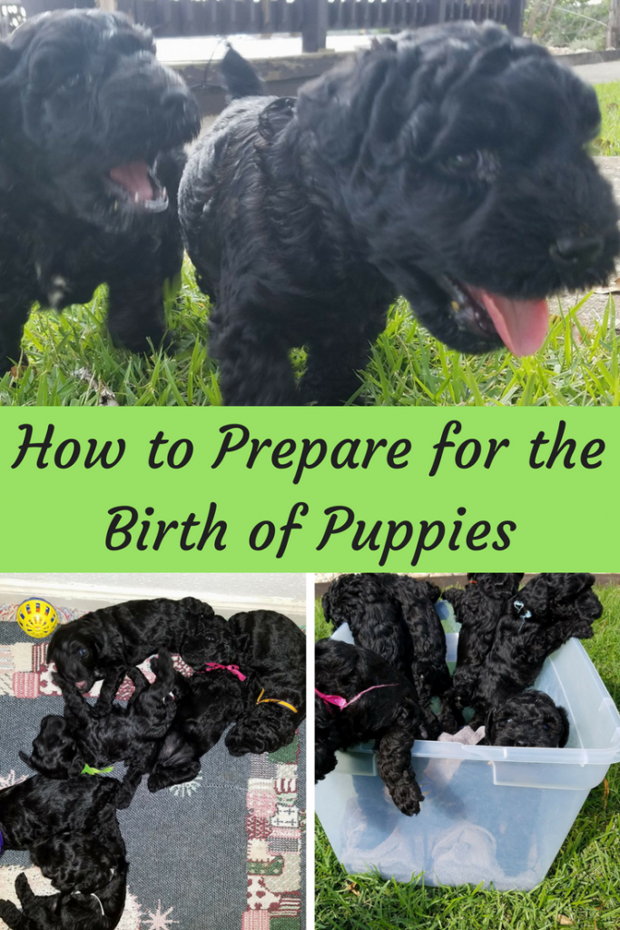 As with all newborn puppies they were beautiful little creatures that brought a lot of joy to everyone around them, but like all sweet babies, they required a lot. Before your dog has their puppies it's important that you are ready and that you know how to prepare for the birth of puppies.