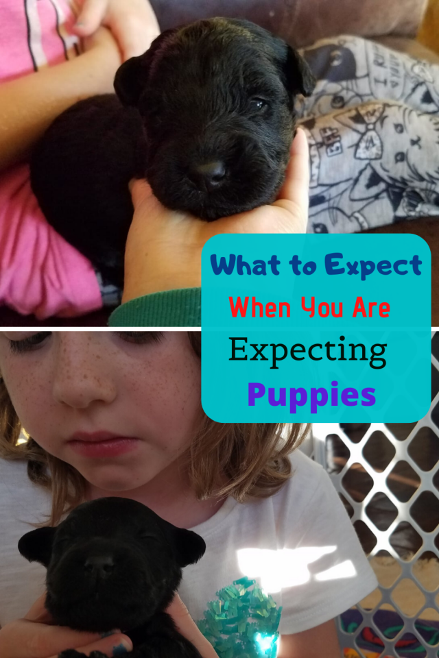 There is a lot to know when you are raising puppies. Here are a few things you need to know!